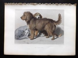 Landseer 1880 Antique Hand Col Dog Print. The Three Dogs
